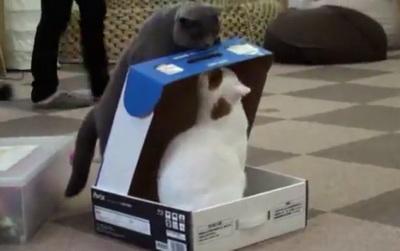 Коты в картонной коробке