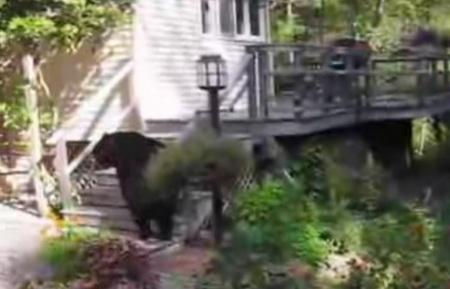 Медведь во дворе частного дома