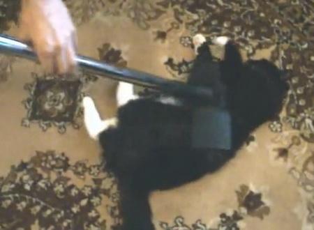 Чистка кота пылесосом