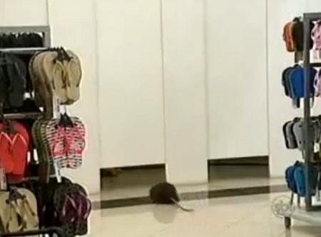 Крыса в примерочной комнате