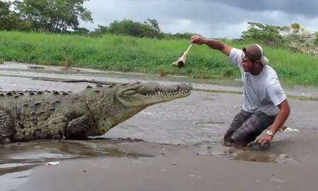 Кормление крокодила с рук