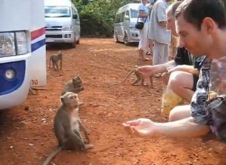 Кормление обезьян орешками